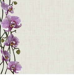 Pale background with purple orchid flowers vector