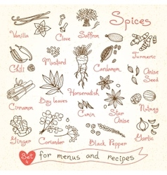 Set drawings of spices for design menus recipes vector