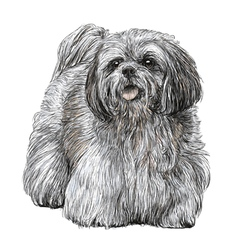 Lhasa apso 02 vector
