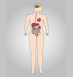The human body vector