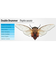 Double drummer vector