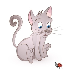 Cat storit to a bug vector