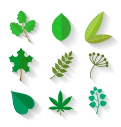 Set of leaves various trees isolated green leave vector