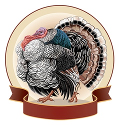 Graphical turkey-cock vector