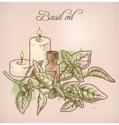Basil essential oil and candles vector