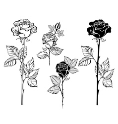 Set of contour roses vector