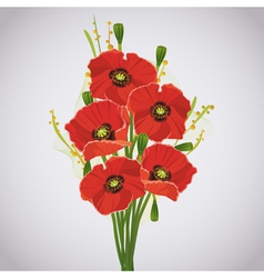 Beautiful celebratory bouquet of red poppies vector