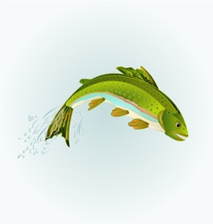 Leaping rainbow trout salmonidae fish vector