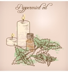 Peppermint essential oil and candles vector