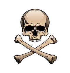 Colored human skull and crossbones vector