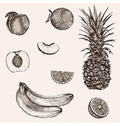 Sketch banana pineapple peach orange hand drawn vector