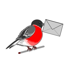 A funny bullfinch with a letter vector
