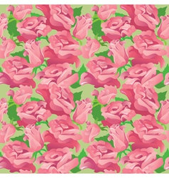 Pink roses 2 380 vector