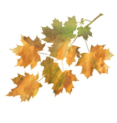 Maple branch vector