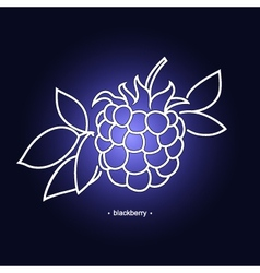 Blackberry in the contours vector