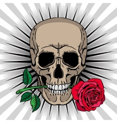 Skull holding a rose in his mouth vector