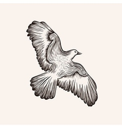Sketch bird hand drawn vector