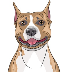 American staffordshire terrier b vector