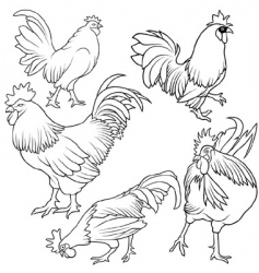 Rooster set vector