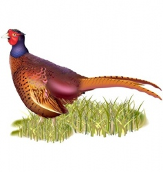Forest pheasant vector
