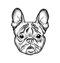 Sketch french bulldog hand drawn vector