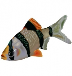 Tiger barb vector