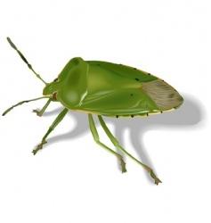 Stink bug vector