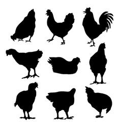 Hen cock silhouette set vector