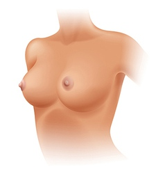 Human breast vector