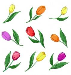 Flower tulips set vector