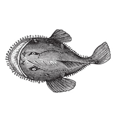 American anglerfish engraving vector