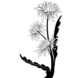 Chrysanthemum vector