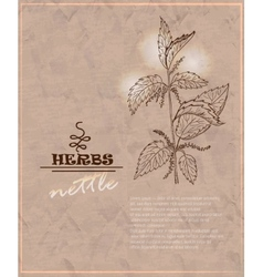 Vintage background with nettles on old paper vector