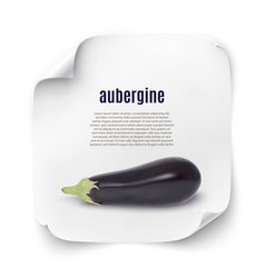 Background with realistic aubergine vector