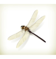 Dragonfly realistic vector