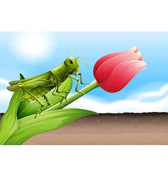A grasshopper and the flower bud vector