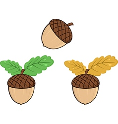 Cartoon acorn design vector