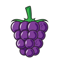 Blackberry isolated on white vector