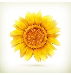 Sunflower high quality vector
