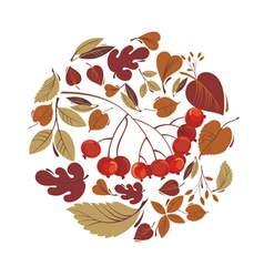 Autumn leaves with rowanberry vector