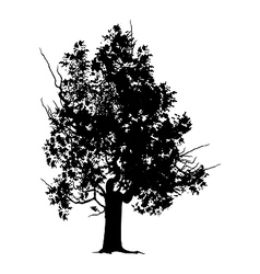 Old tree silhouette vector