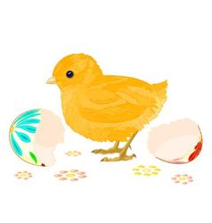 Easter chick hatched from easter eggs vector