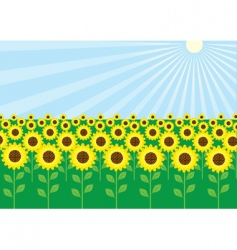 Field of sunflowers vector