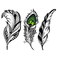 Isolated feathers vector