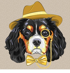 Hipster dog breed king charles spaniel vector