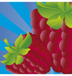 Blackberries on blue background with stripes vector
