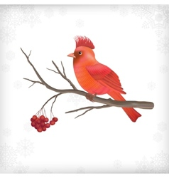 Winter christmas bird rowan tree branches vector
