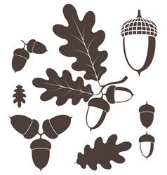 Oak acorn vector