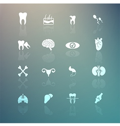Body icons set on retina background vector