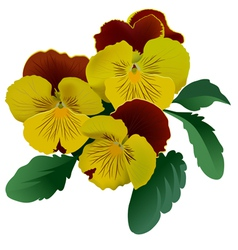 Three yellow pansy flowers with leaves vector
